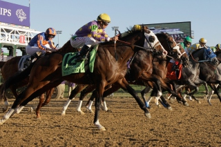 Breeders Cup Picture for Android, iPhone and iPad