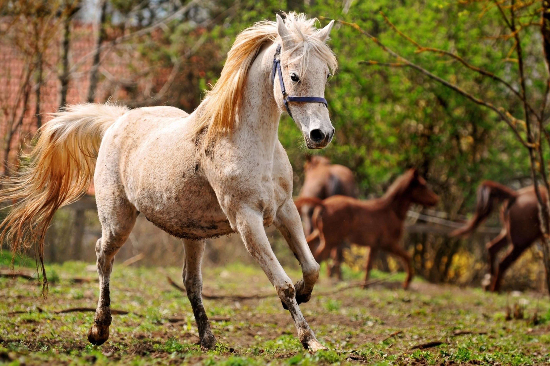 лошадь лицо животное природа бесплатно