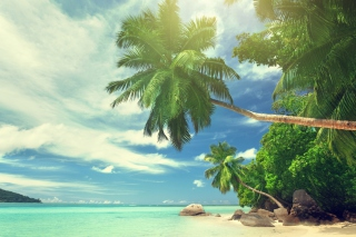 Tropical Island sfondi gratuiti per cellulari Android, iPhone, iPad e desktop