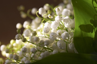 Lily Of The Valley Bouquet - Obrázkek zdarma pro Widescreen Desktop PC 1600x900