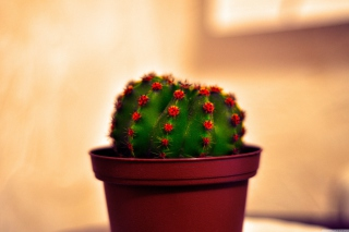 Cactus Wallpaper for Android, iPhone and iPad