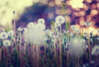 Flower Field And Beautiful Bokeh Background for Android, iPhone and iPad