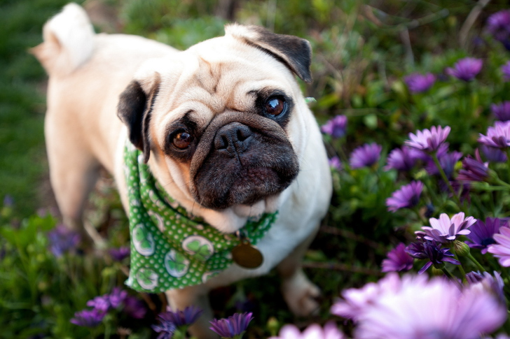 Cute Dog In Garden wallpaper