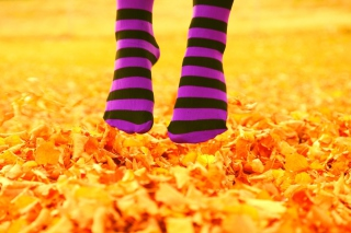 Purple Feet And Yellow Leaves papel de parede para celular