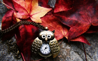 Retro Owl Watch And Autumn Leaves - Obrázkek zdarma