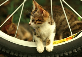 Kitten And Wheel Background for Android, iPhone and iPad