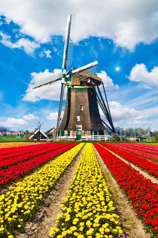 Tulips Field In Holland HD para Huawei G7300