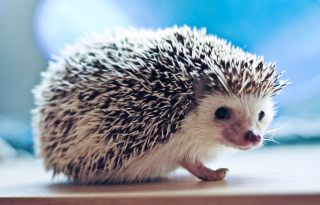 Free Cute Hedgehog Picture for Android, iPhone and iPad