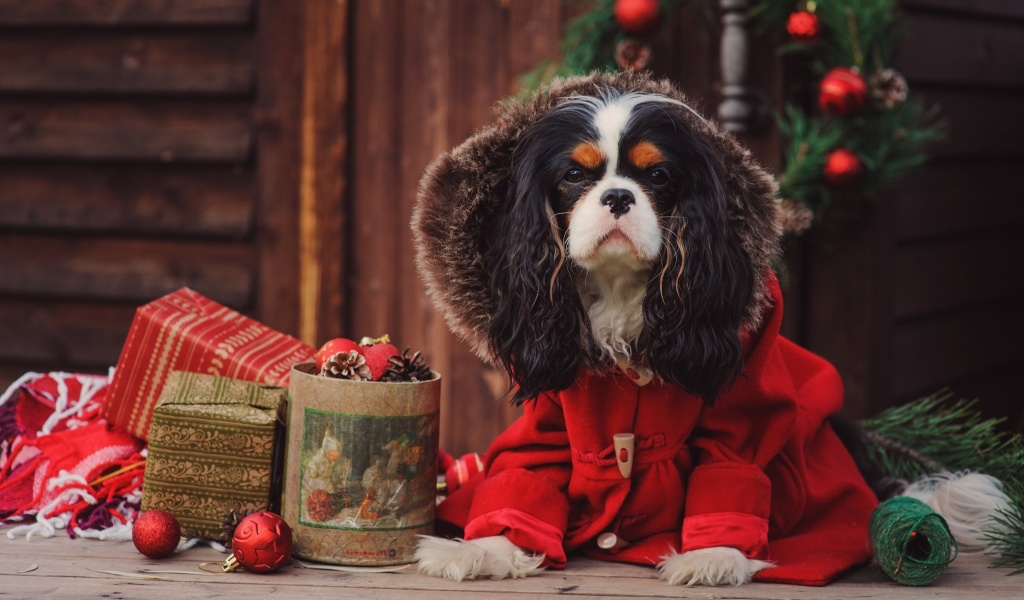 Screenshot №1 pro téma Dog Cavalier King Charles Spaniel in Christmas Costume 1024x600