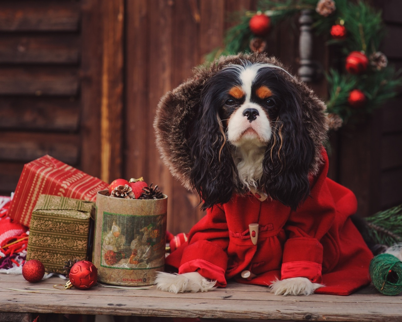 Screenshot №1 pro téma Dog Cavalier King Charles Spaniel in Christmas Costume 1280x1024