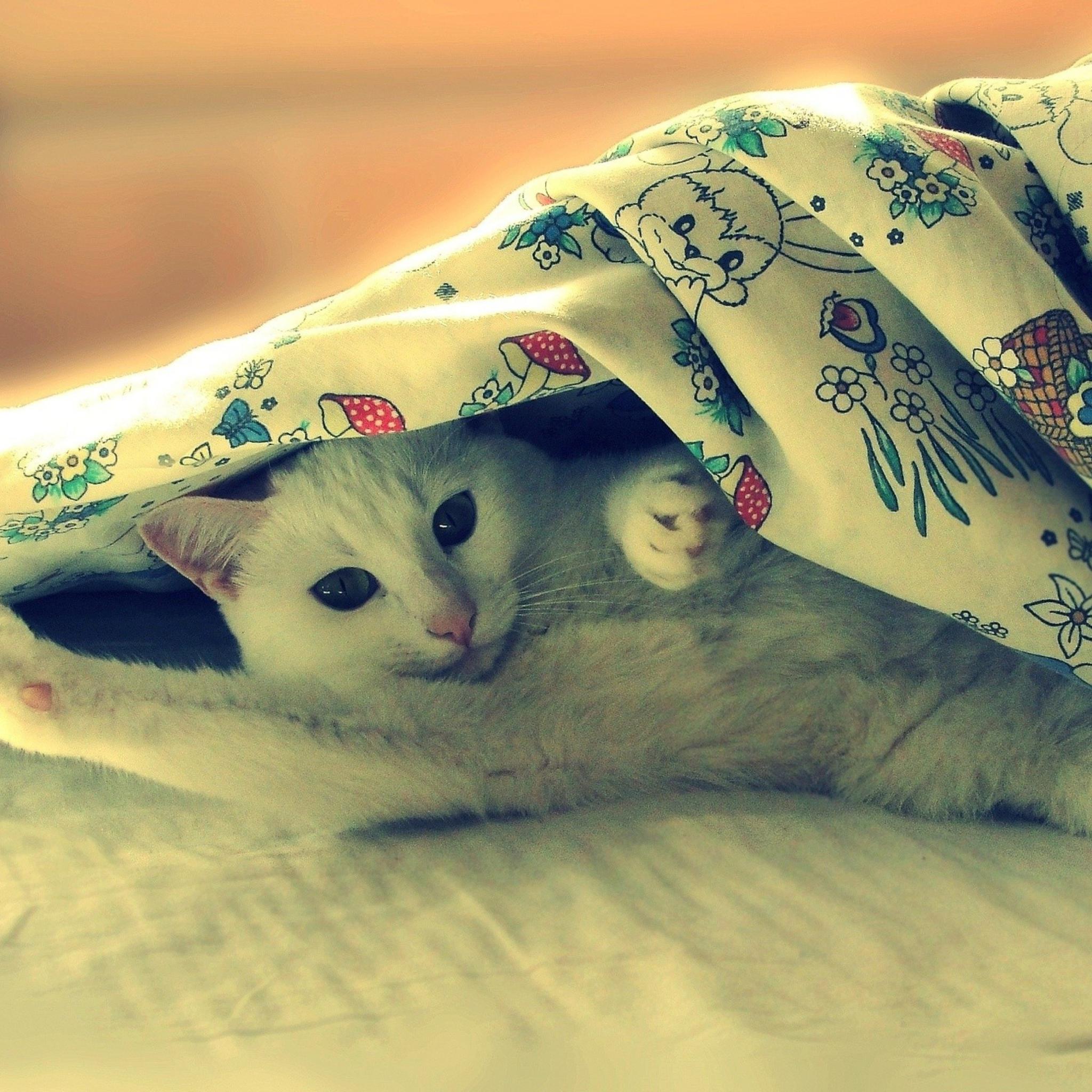 котенок под кроватью бесплатно