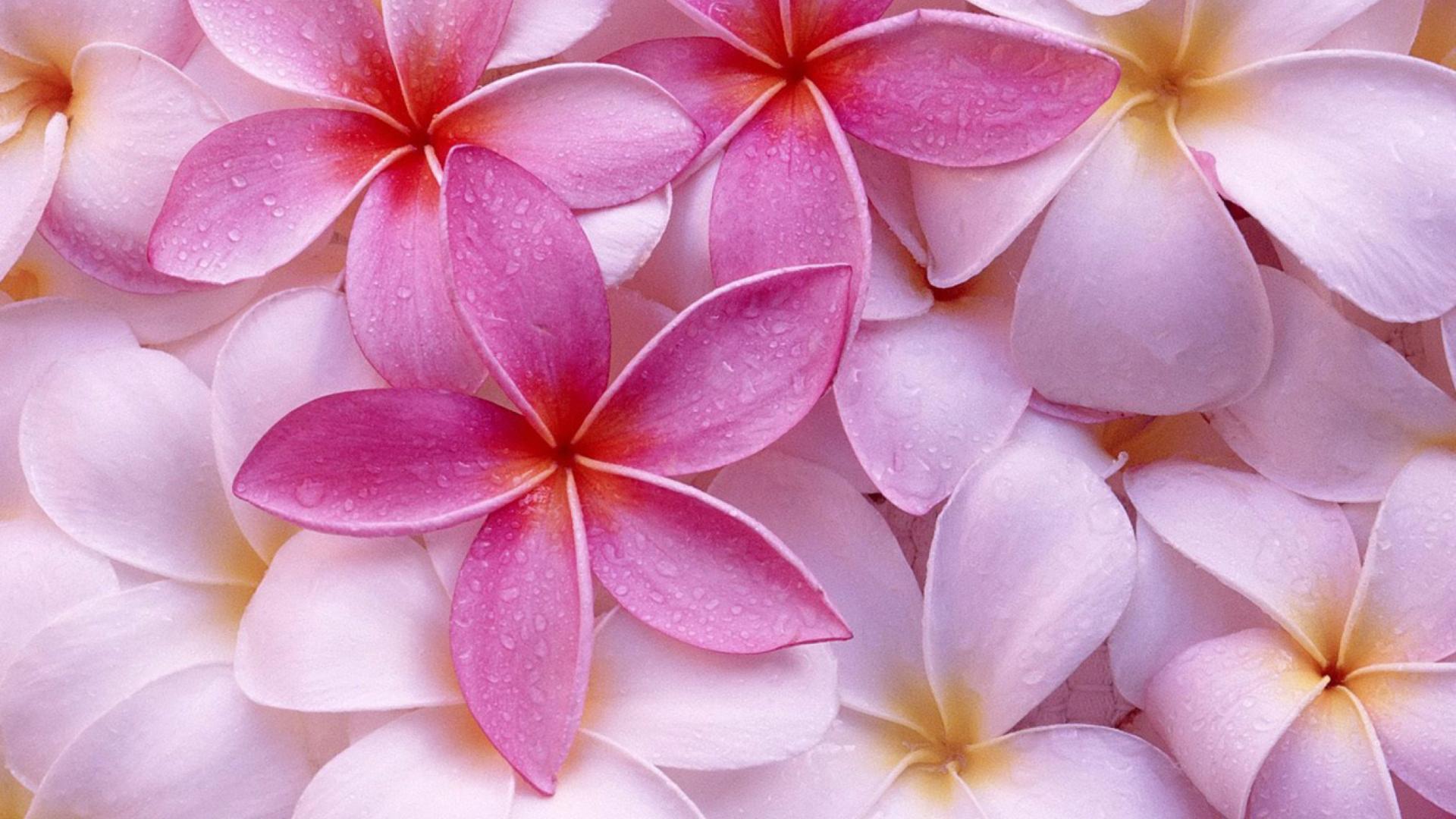 Картинки на телефон во весь экран цветы