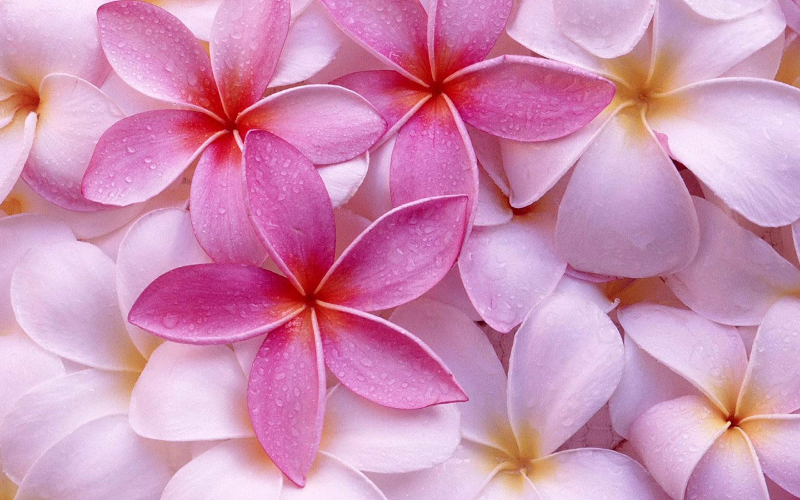 визуальные дополнения картинки на телефон обои для телефона цветы стеллажи для книг