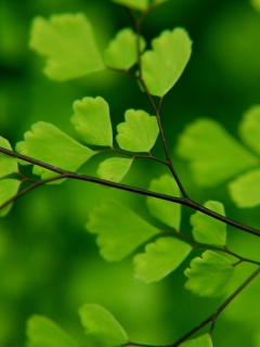 Green Leaves On Branch screenshot #1 240x320
