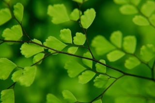 Green Leaves On Branch papel de parede para celular para Fullscreen 1152x864