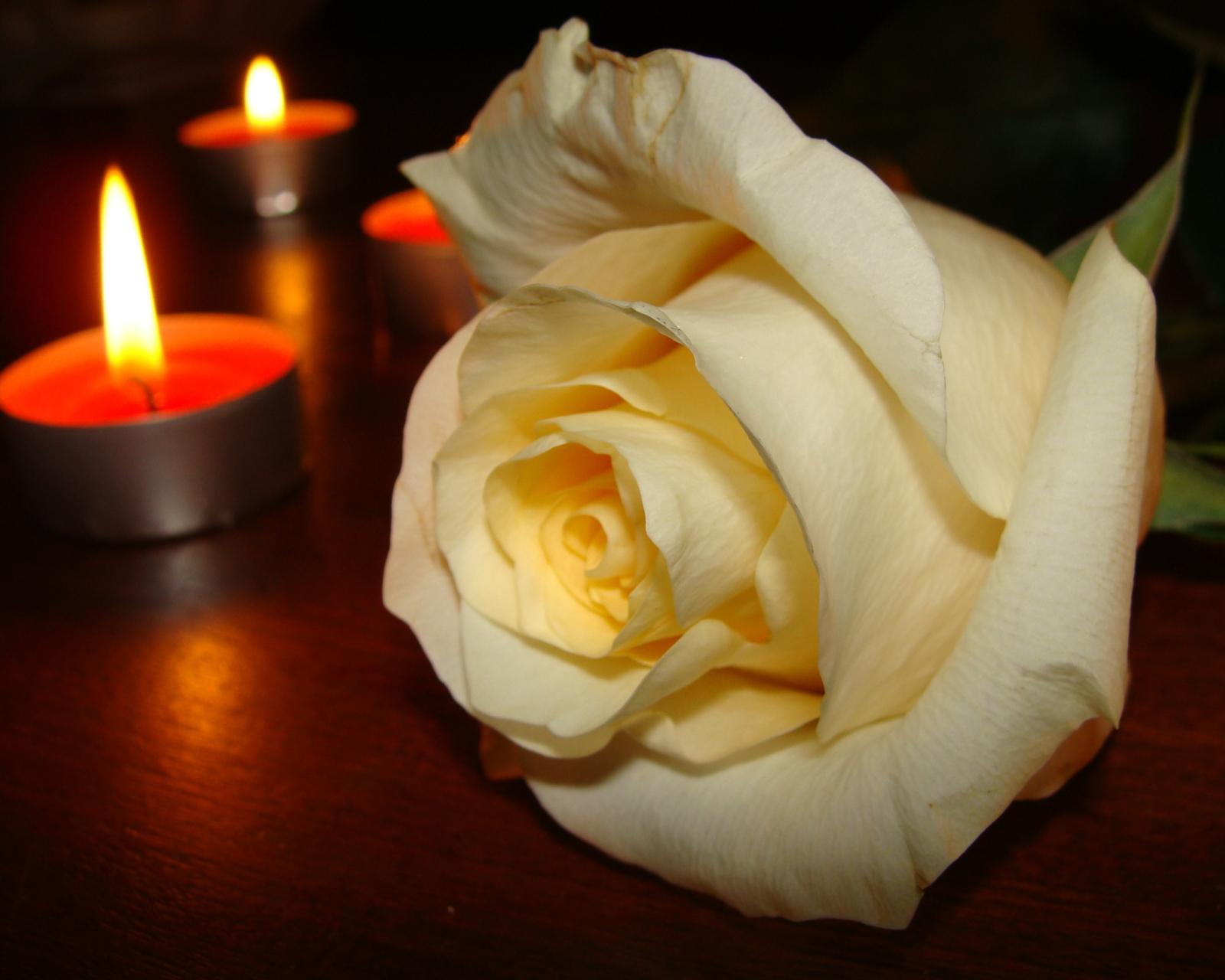 свечи с розами фото штукатурка