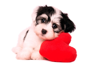 Love Puppy Background for Android, iPhone and iPad