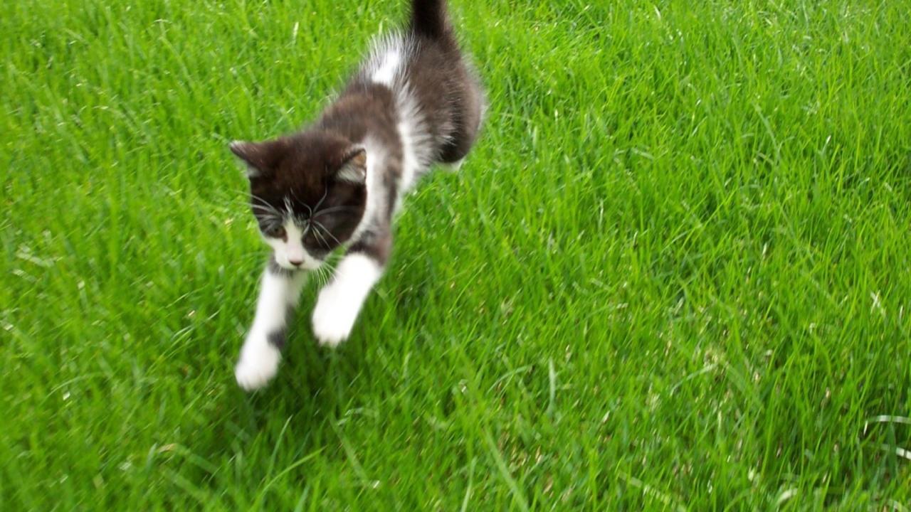 Flying Kitten