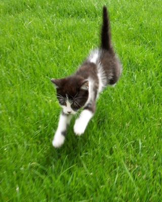 Free Flying Kitten Picture for HTC Titan