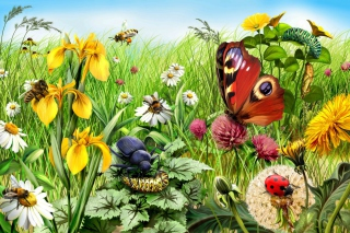 Summer Meadow Background for Android, iPhone and iPad
