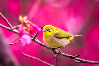 Cute Yellow Bird - Fondos de pantalla gratis