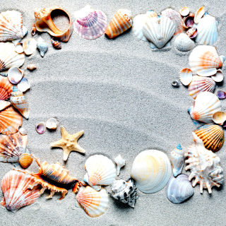 Free Australian Seashells Favors Picture for 1024x1024