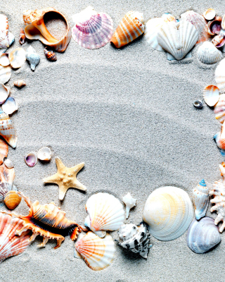 Free Australian Seashells Favors Picture for iPhone 6 Plus