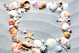 Free Australian Seashells Favors Picture for HTC Desire 310