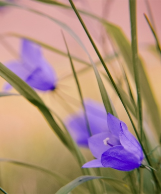 Free Blue Wild Flowers Picture for Nokia C1-01