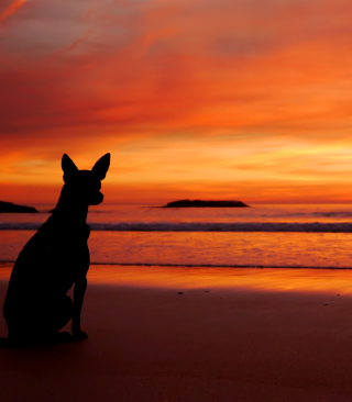 Free Dog Looking At Sunset Picture for Nokia C1-01