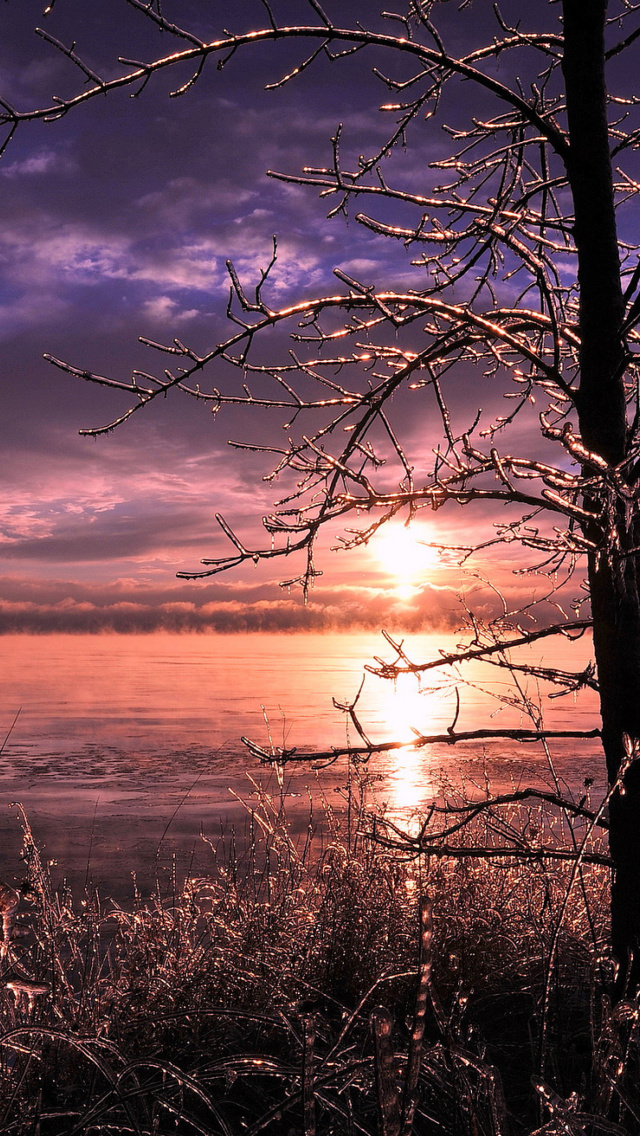 Screenshot №1 pro téma Frozen Trees near Lake in Canada 640x1136