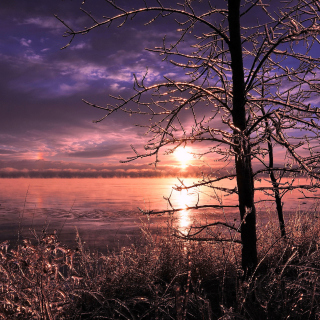 Frozen Trees near Lake in Canada - Fondos de pantalla gratis para iPad 2
