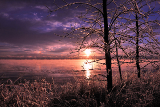 Free Frozen Trees near Lake in Canada Picture for Android, iPhone and iPad
