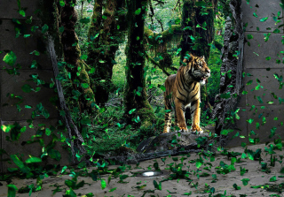 Tiger Running Free Wallpaper for Android, iPhone and iPad