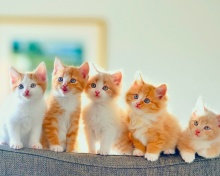 Sfondi Cute Kittens 220x176