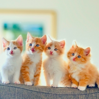 Cute Kittens sfondi gratuiti per iPad Air