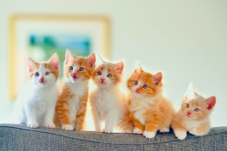 Cute Kittens Background for 1024x768