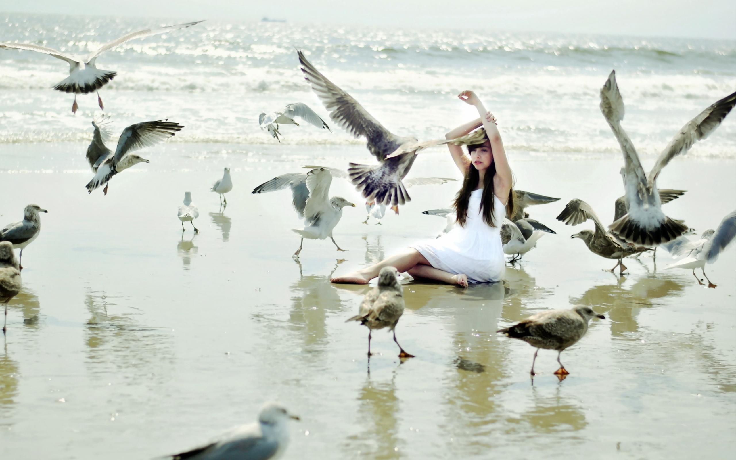 Чайка на песке скачать