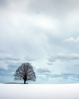Free Austria Winter Landscape Picture for 240x320