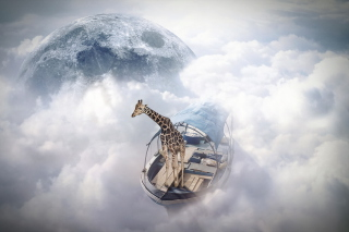 Giraffe Traveler Picture for Android, iPhone and iPad