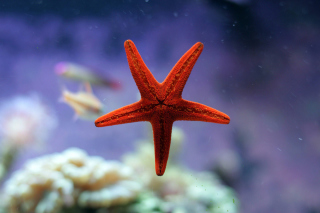 Seastar Background for Android, iPhone and iPad