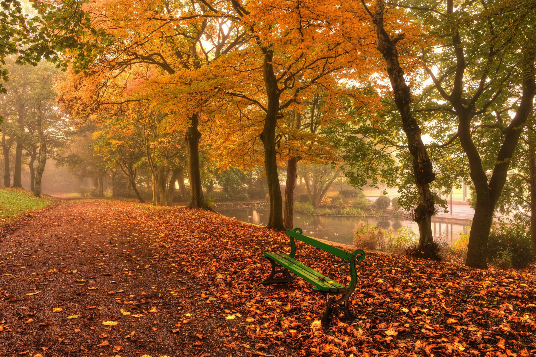 Лавочка дерево листья осень загрузить