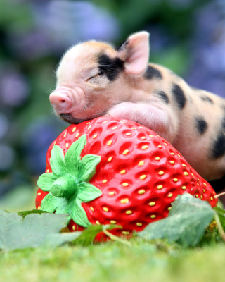 Pig and Strawberry Wallpaper for HTC Titan
