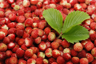 Wild Strawberry Wallpaper for Android, iPhone and iPad