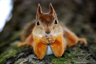 Funny Squirrel Background for Android, iPhone and iPad