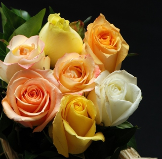 Free Roses Picture for 1024x1024