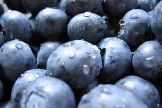 Blueberries Picture for Android, iPhone and iPad