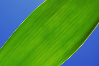Green Macro Leaf Wallpaper for Android, iPhone and iPad