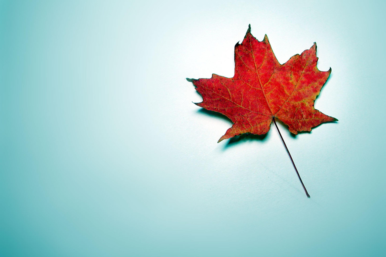 Красный листок без смс