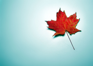 Autumn Leaf Wallpaper for Android, iPhone and iPad